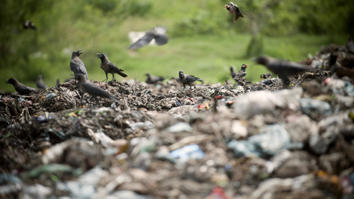 A dump site in Dhaka. Photo Credit: KIbae Park, 2010